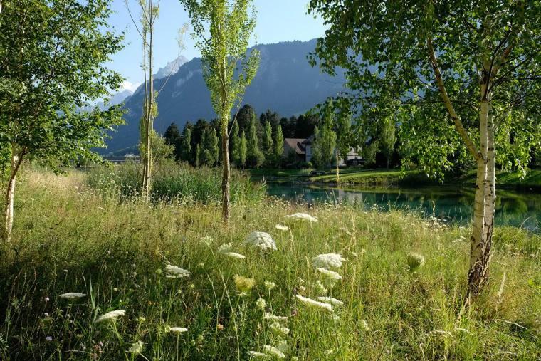 瑞士LowerFactoryPond水系环境修复-10