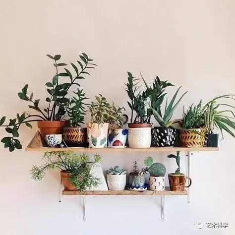 春天了,不要老羡慕有花园的人家,试试养一些有趣的垂吊植物