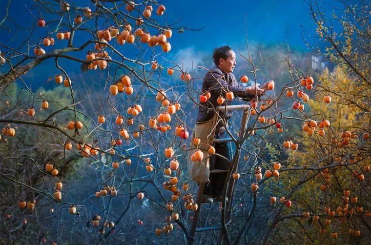 这才是中国人的院子,秋天美到骨子里_7
