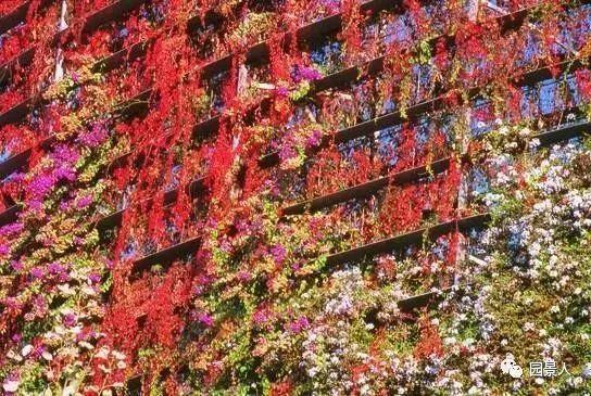 垂直绿化·会呼吸的墙壁_15