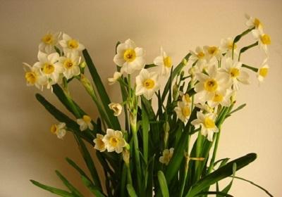 香花植物-嗅觉盛宴_10