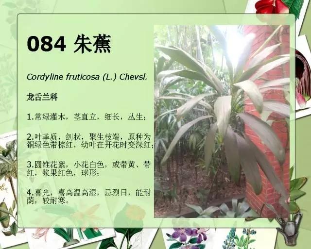 100种常见园林植物图鉴-20160523_183224_110.jpg