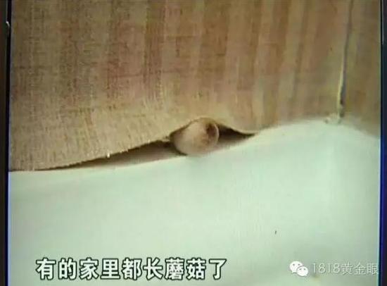 杭州新房交付1个月渗水长蘑菇承重墙开裂