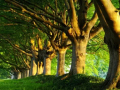 园林施工必备贴丨你心心念念的大树移植
