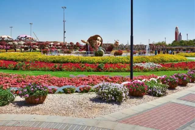 迪拜的花卉展览,全世界规模最大!你肯定没看过!_24
