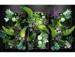 超精细多肉植物3D模型