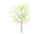 bim软件应用-族文件-嵌套树