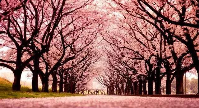 """这些必备的""""植物造景"""",不止是种树种花_5"""