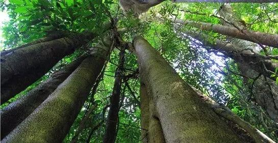 植物界的吉尼斯世界纪录大全-640.webp (4).jpg