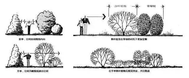"""这些必备的""""植物造景"""",不止是种树种花_29"""