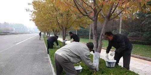 园林植物冬防,这六大误区千万要当心!_3