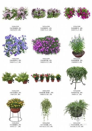 植物图例下载