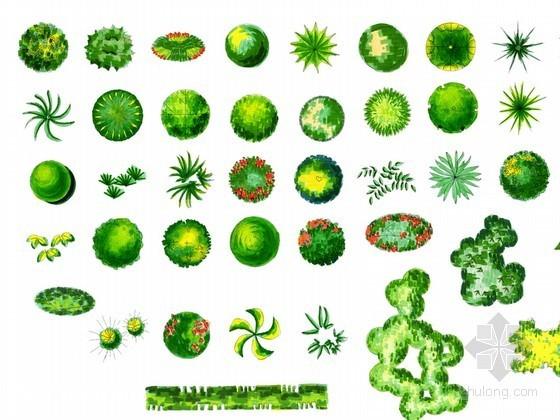 PS植物平面素材