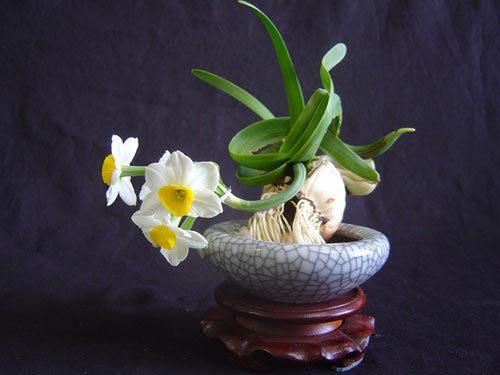 四季中,让人嗅到醉的植物-水仙2.jpg