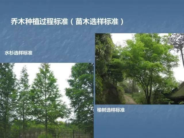 龙湖景观施工工艺标准效果(让你更懂现场)--软景篇_8