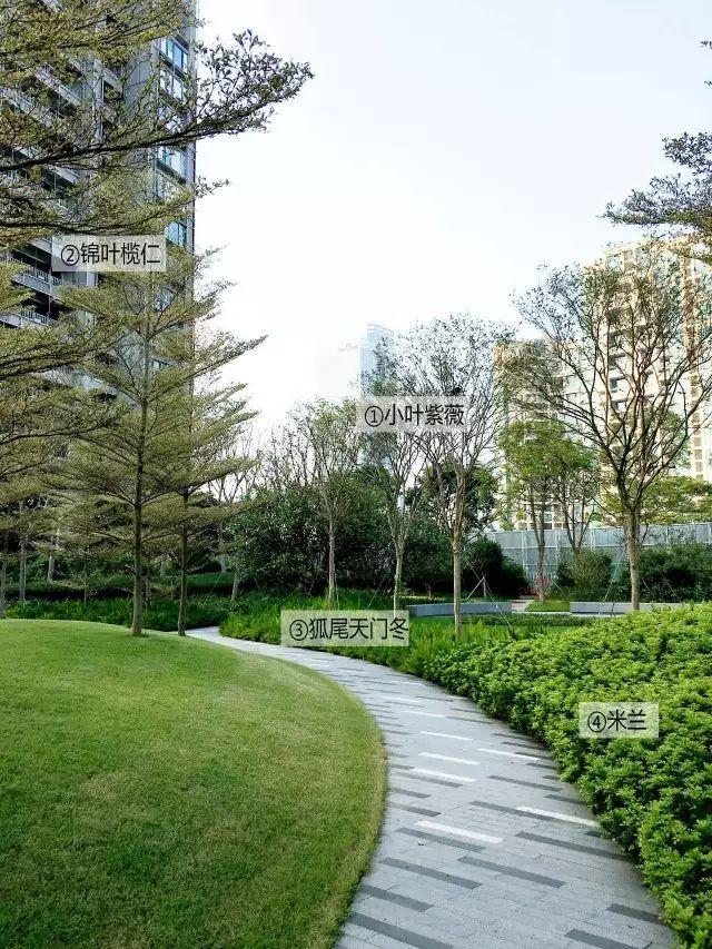 最详细图解:深圳湾三大豪宅景观植物配置!_29