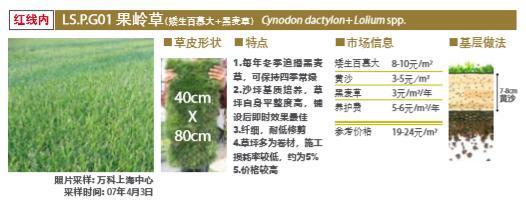 大型地产公司绿化绿皮书(做法与验收标准)-大型地产公司景观植物绿化绿皮书-1果岭草设计标准