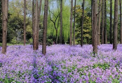 干货 景观地被植物的选择方式_18
