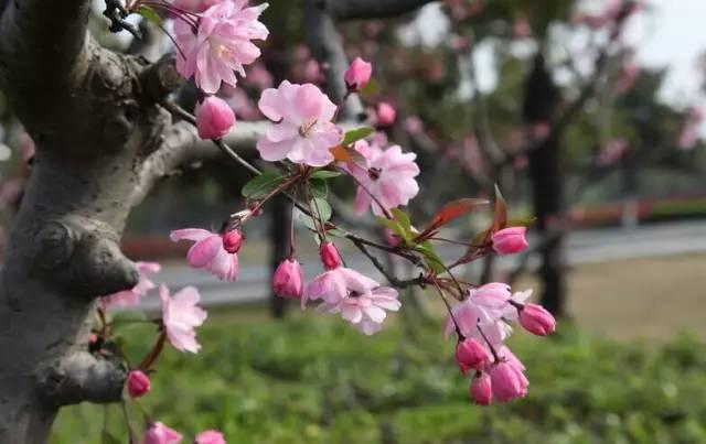 想种点树,看别墅庭院设计中植物栽种的风水