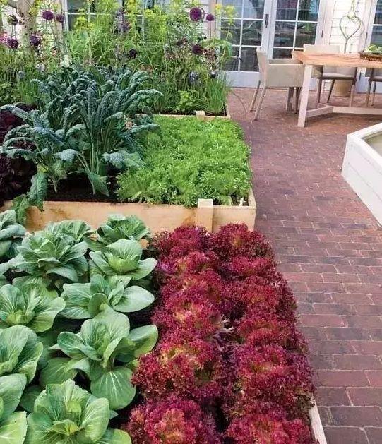 如何用植物装点你的园林景观!_16