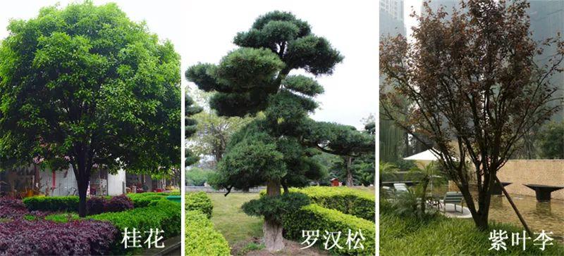 植物造景·实用景观设计来一波_36