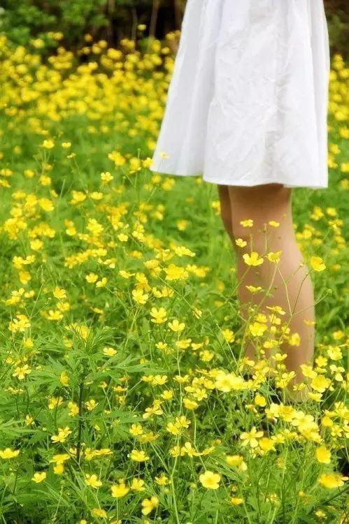 这些乡村的野花野草,是否还记得它们的名字和模样?