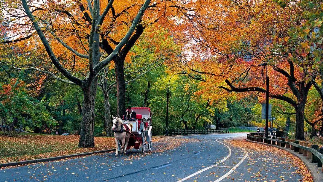 美国景观设计之父|奥姆斯特德和他的纽约中央公园_14