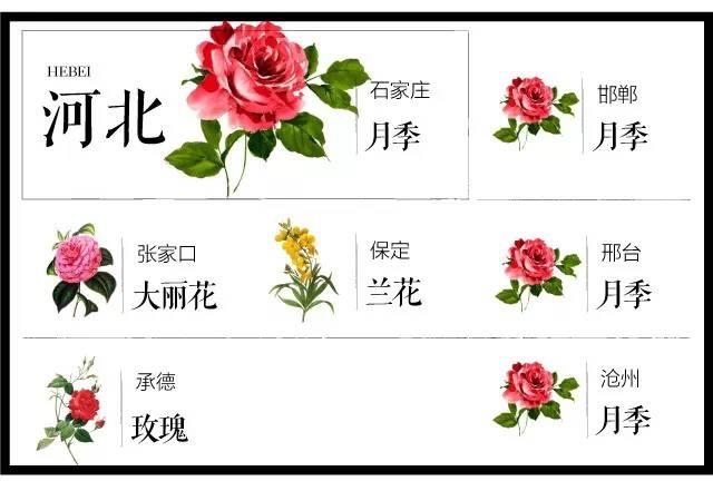 204个城市·史上最全中国各城市市花_17