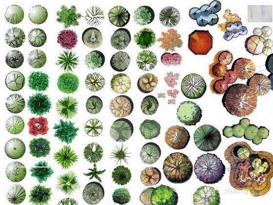 免费分享!最新ps植物平面图素材下载