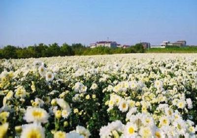 香花植物-嗅觉盛宴_33