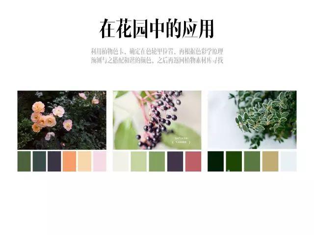 干货|庭院花园中的色彩搭配_7