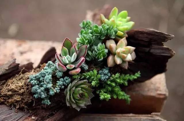 绿植这样摆,你家比园林还要美!_2