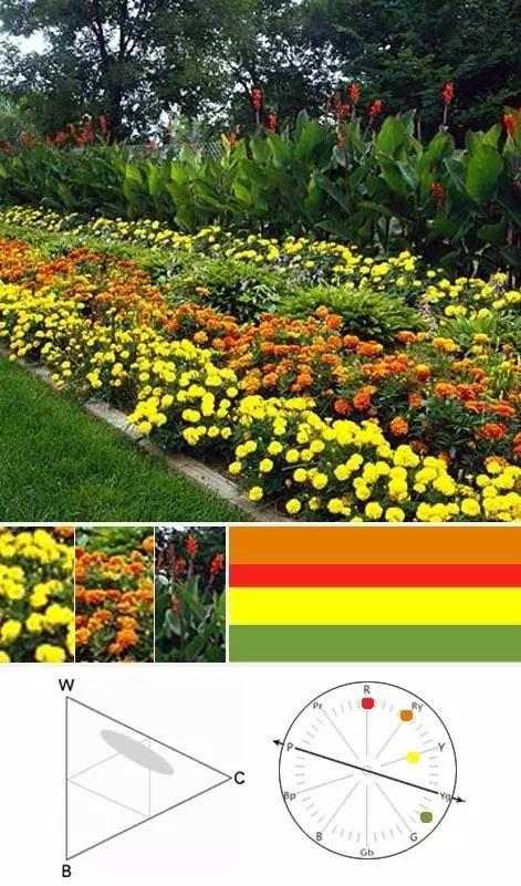 园林植物色彩的搭配技巧