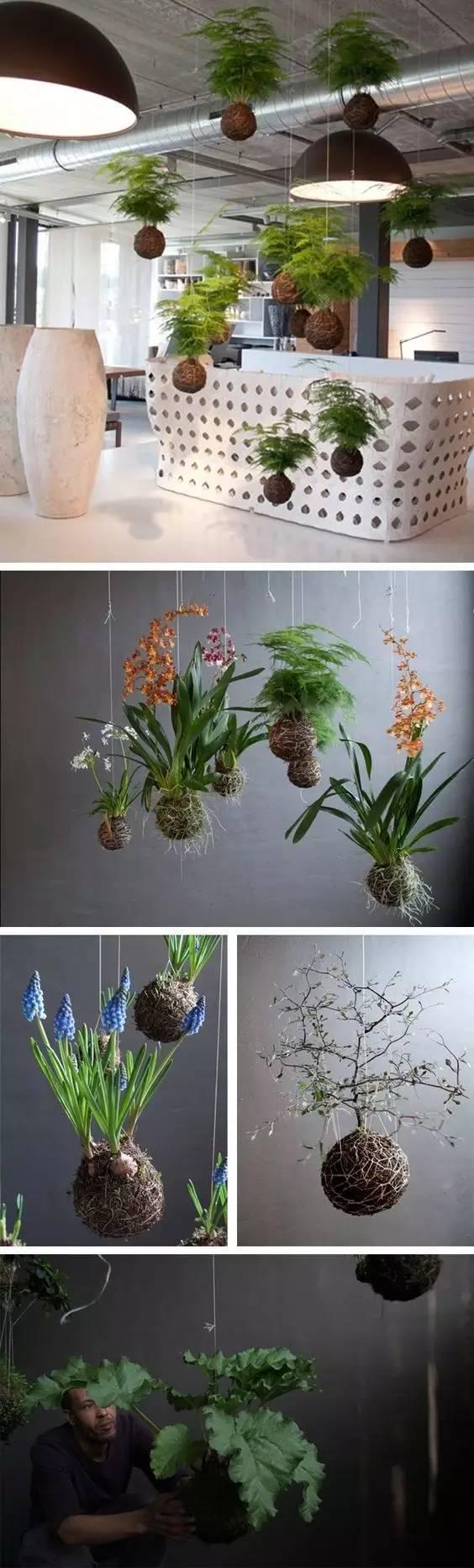植物才是最美的隔断_17