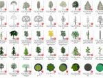 一套景观植物SU模型合集