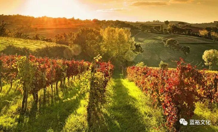 葡萄酒小镇-未来酒庄旅游的新形势