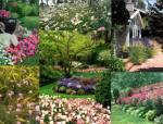 怎样才能种出美丽的花境?