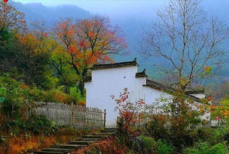 我想有一个院子,看花开花落一辈子