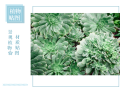 景观植物材质贴图
