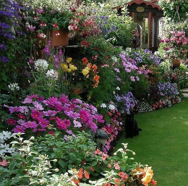 你真正需要的,也许只是一个小院,看繁花爬满篱笆_8
