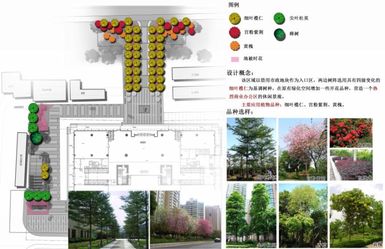 海联大厦(销售期)景观深化设计方案文本-海联大厦( 销售期)景观深化设计方案文本C-4大树布点