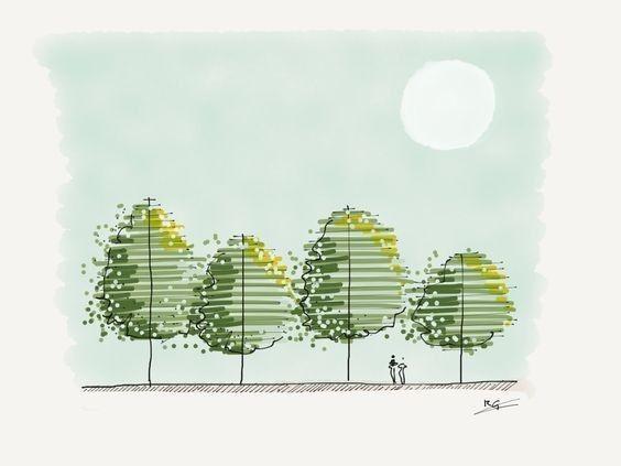 怎样把树种出艺术范?_20