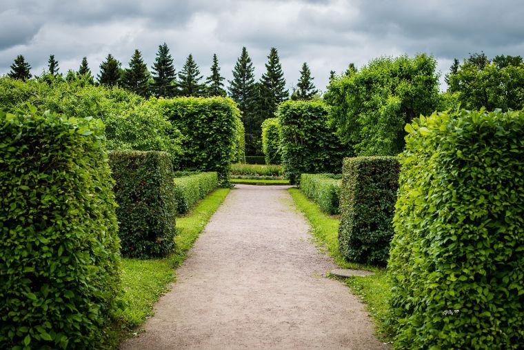 植物设计师据要具备什么能力?如何成为优秀的景观设计师?