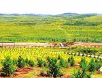 北京将启动新一轮百万亩造林绿化工程