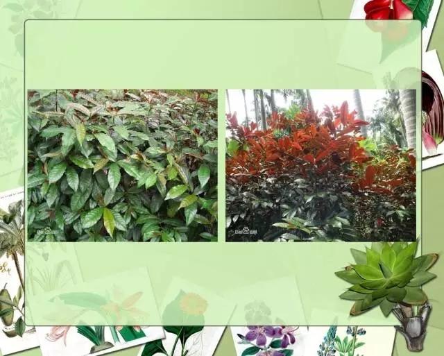 100种常见园林植物图鉴-20160523_183224_044.jpg