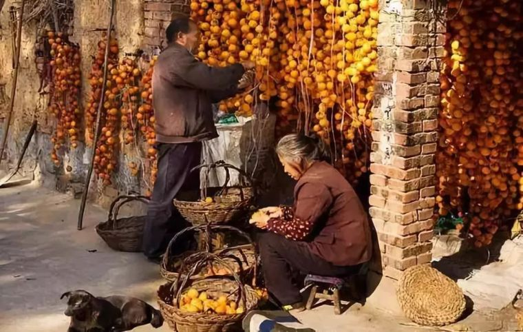 这才是中国人的院子,秋天美到骨子里_42