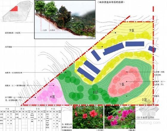 深圳某区植被恢复工程设计方案及施工图