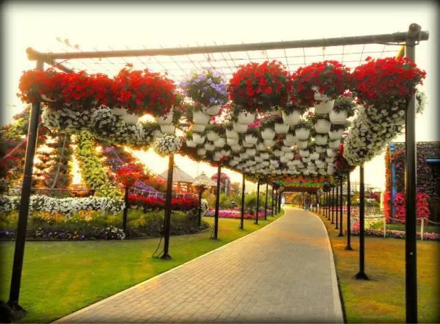 迪拜的花卉展览,全世界规模最大!你肯定没看过!_23