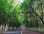 景观人必知的行道树知识!