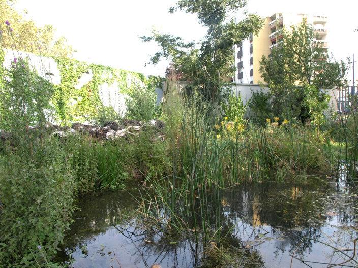 住宅区中的私人花园景观实景图 (8)